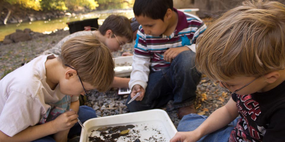kids studying macroinvertebrates